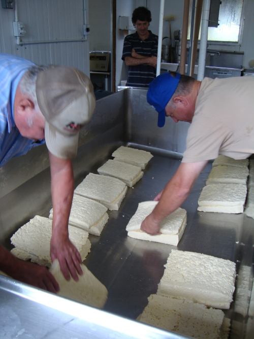 Ray Sr. and Ray Jr. flip the curds to drain excess whey.