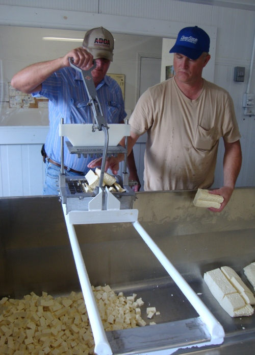 The father and son cut the curds.