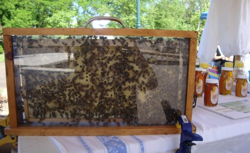 A display hive at the booth for Greater Hot Springs Beekeepers' Association.
