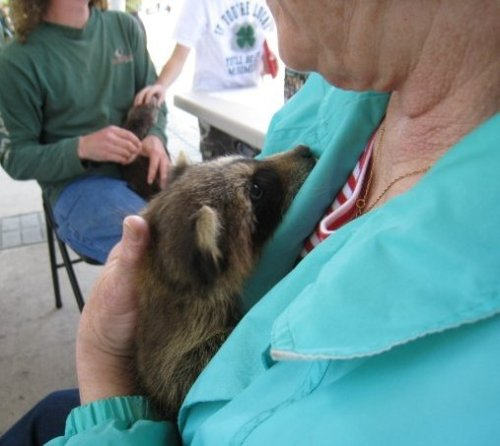 An attendee holds a baby raccoon. Tommy Young, a federally licensed wildlife rescuer, holds Otto the Baby Otter in the background. I plan to visit Tommy very soon, so stay tuned for his story!