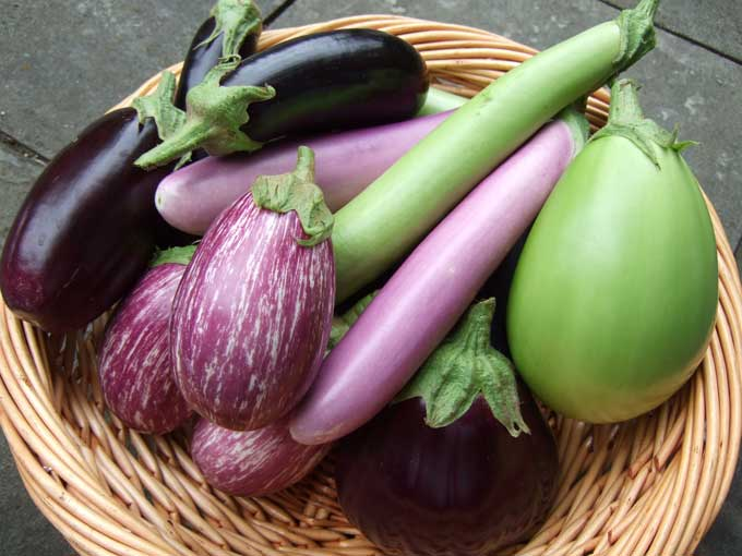 http://greenarbytheday.files.wordpress.com/2009/08/eggplant.jpg